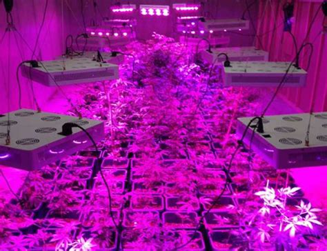 cob led grow light raysace spectrum led grow lights