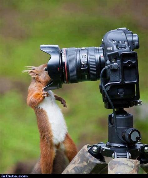 Meme Photography - funny little squirrel photographer iscute com