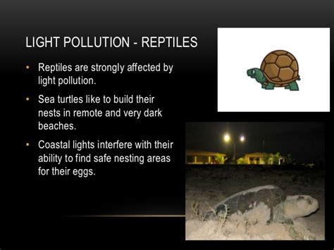 effects of light pollution light pollution