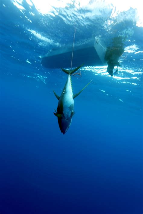 17 best images about ascension 17 best images about ascension island spearfishing on