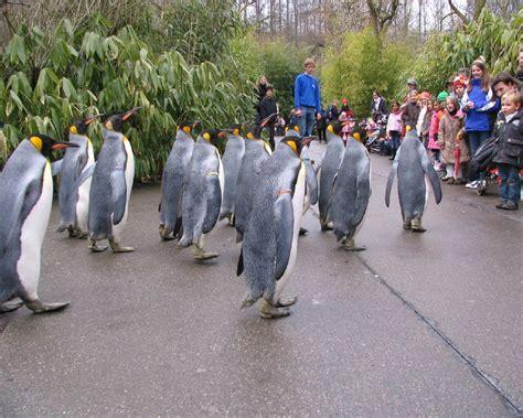 Zoologischer Garten Basel öffnungszeiten by Switzerland Tourism Mojo Travel