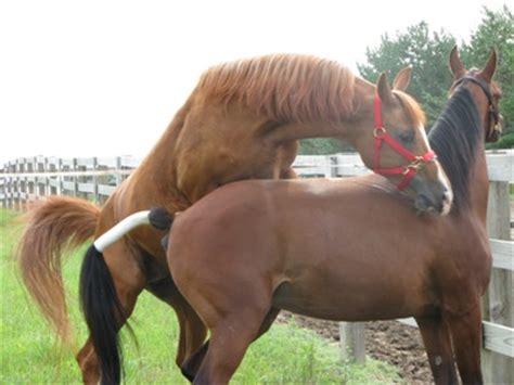 breeding horses mares stallion recordkeeping for horse breeding activities extension