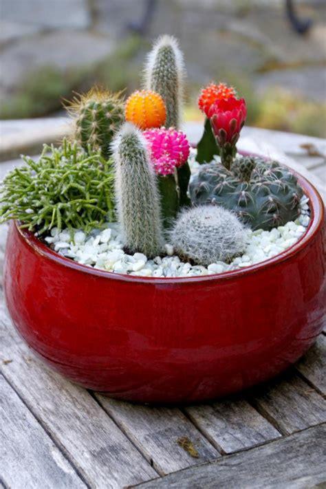 dish garden ideas diy cactus dish garden hgtv