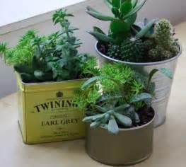 un mini jardin de succulentes modes travaux