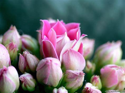 foto fiori foto fiori pag 1