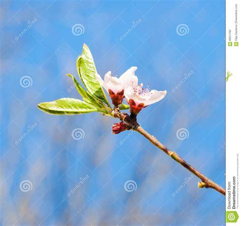 albero fiori rosa albero con fiori rosa ispirazione design casa