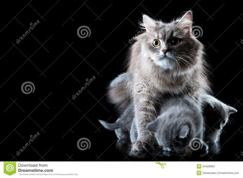 Protect From Cat by Cat Protect Kittens Stock Photography Image 24428692