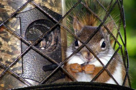 how to keep pesky squirrels away from feeders