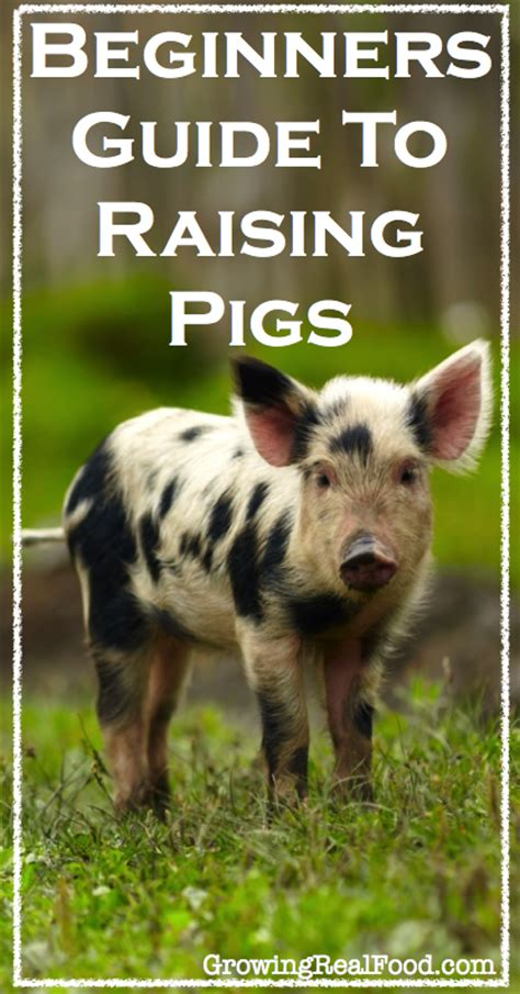 how to raise pigs in your backyard best 25 pig feed ideas on pinterest pig farming pet