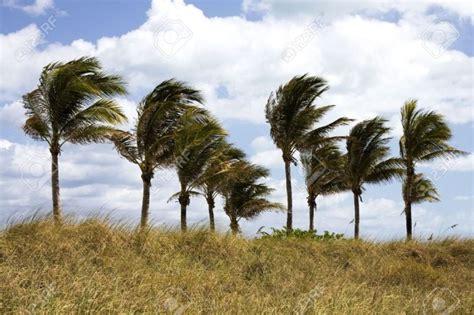 el viento en los los vientos fuertes se mantendr 225 n este lunes en canarias gomeranoticias