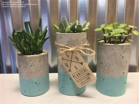 Cloth Planters by Trash To Treasure Diy Cement Cloth Draped Planters 1 By Ifantail