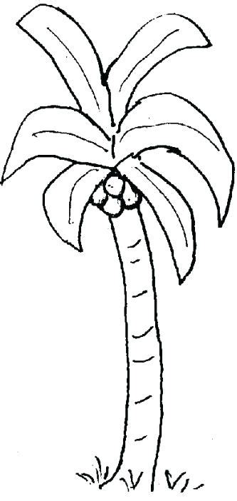 printable coconut tree template coconut tree coloring page palm s pages chicka boom