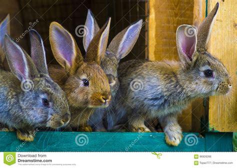conigli in gabbia piccoli conigli coniglio in gabbia o conigliera dell