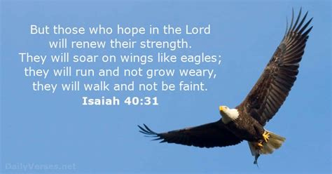 comfort eagle meaning isaiah 40 31 bible verse of the day dailyverses net
