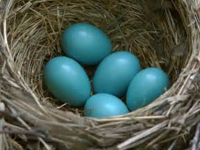 what color are blue eggs may 2009 alaska flowers birds flattop mt