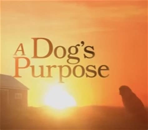 a s purpose trailer 2017 a s purpose trailer song
