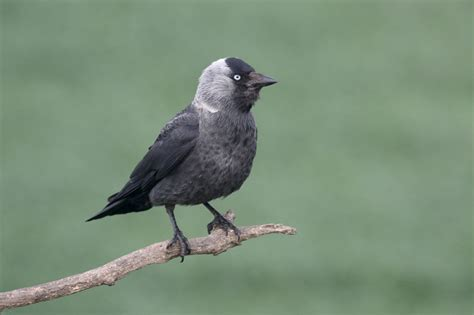 getting rid of crows in backyard how to attract crows to your backyard
