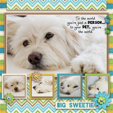 scrapbook layout ideas for pets 5 photos scrapbook layouts pinterest