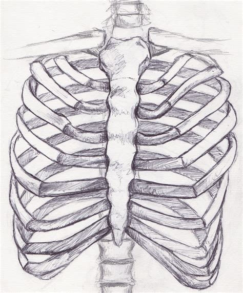 bone anatomy sketches 1000 ideas about skeleton anatomy on