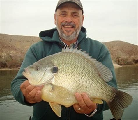 Records Arizona International Fishing News Us World Record Sunfish In Arizona