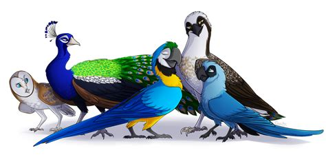 bird breeds my favorite bird species by nairasanches on deviantart