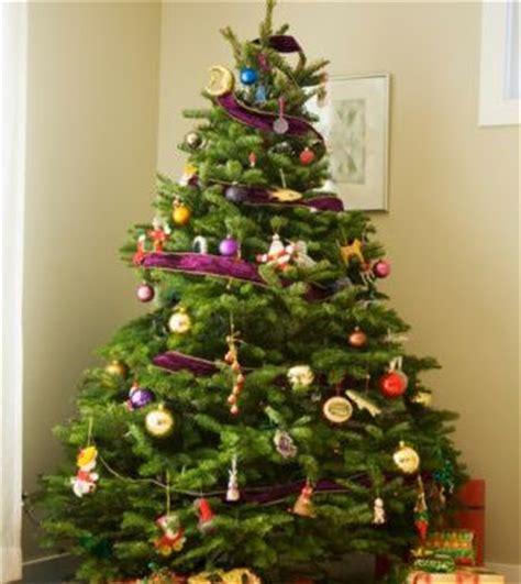 where to put christmas tree pick an eco friendly christmas tree this christmas the