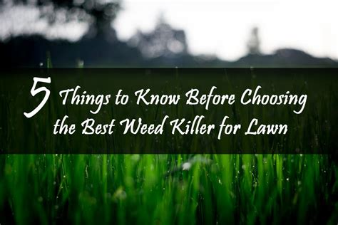Killer For Garden by Best Killer Spray For Lawn Review 5 Things To