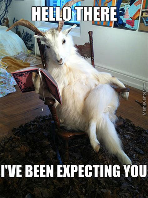 Funny Goat Memes - and your goat memes best collection of funny and your
