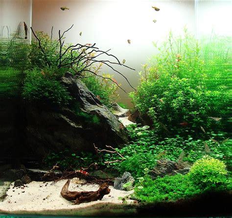 decoracion acuario la decoraci 243 n del acuario piedras rocas troncos ra 237 ces