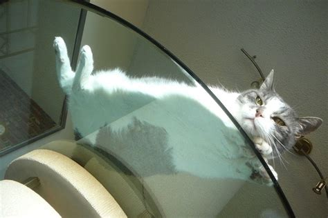 Cat Sitting At Table Meme - 16 hilarious pictures of cats sitting on a glass table