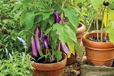 How To Make Terrace Vegetable Garden Complete Tutorial Vegetable Gardening In Terrace