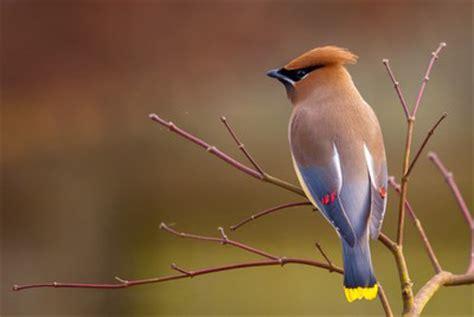 cornell great backyard bird count backyard bird count goes global shatters records