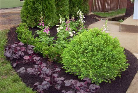 types of landscaping image gallery landscaping shrubs