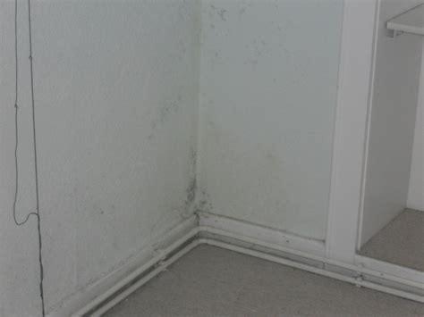 schimmelbeseitigung wohnung loy raumgestaltung wohnraumklima in wiesbaden mainz und