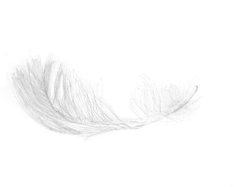 feather lights the feather inclusion guide when to avoid feathers