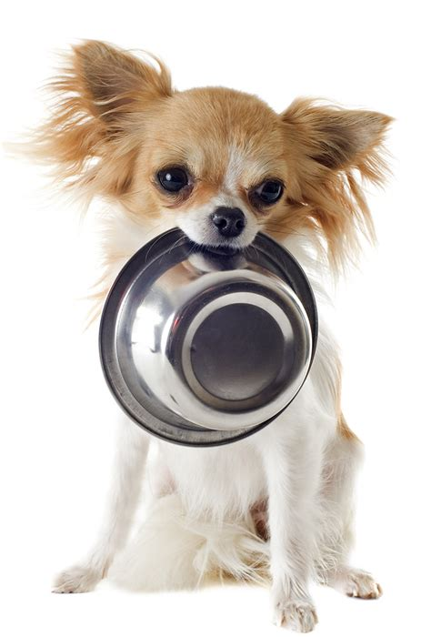 how much food does a puppy need best food for chihuahua puppy tips and reviews