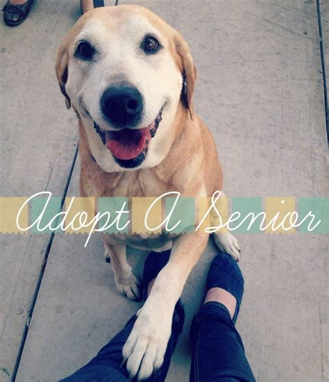 senior dogs for adoption august is adopt a senior month at the hydrant