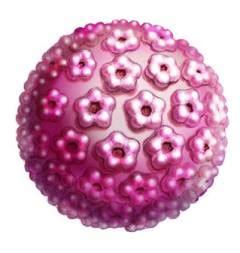 papilloma virus pap test pap test e test hpv