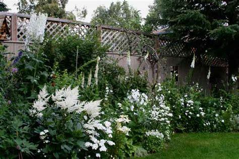 White Garden Flowers White Garden Mangotangerine