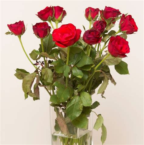 tesco valentines roses tesco fresh flowers ireland thin