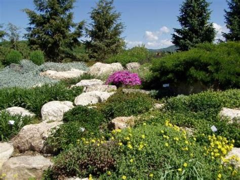 Steamboat Botanic Gardens Blooming Fauna Picture Of Ya River Botanic Park Steamboat Springs Tripadvisor