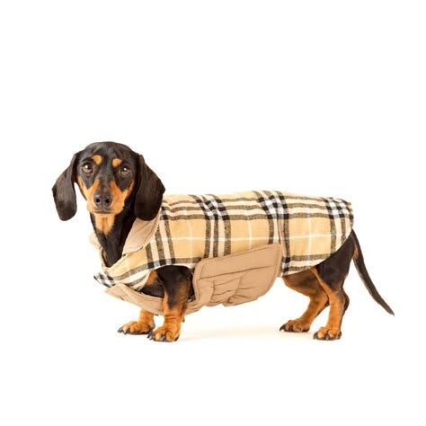 the adventures of sheriff frank and the dachshund posse the sheriff s book 1 books wave goodbye to winter frankie the lil sausage