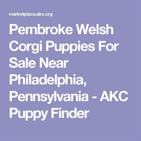 akc puppy classes near me 17 best ideas about puppy finder on puppy care a puppy and stuff