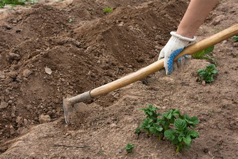 different types of garden hoes uses for hoes in the garden