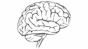 brain sketch video clip royalty free 10775087 pond5