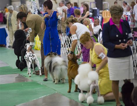 akc show 14 dogs die in roseland when truck s air conditioning fails local southbendtribune