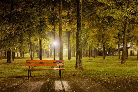 bench at night paper backgrounds bench and trees at night