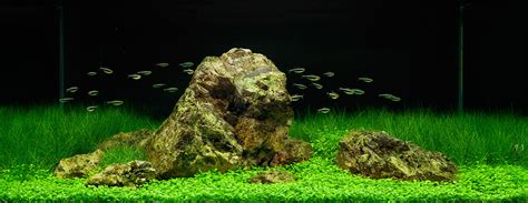 Iwagumi Aquascape by The Iwagumi Layout An Introduction Aquascaping
