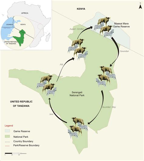 nature of migration pattern in nigeria the great wildebeest migration tracking calendar