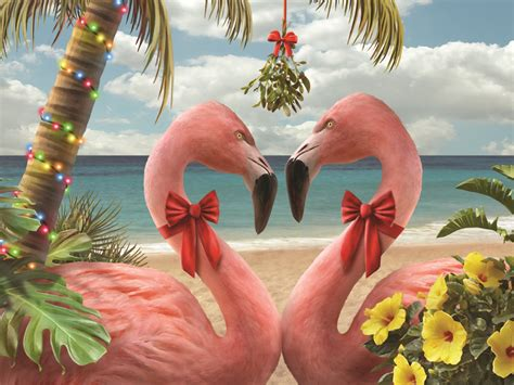 tropical kiss pink flamingos holiday paradise kersten